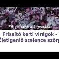 Frissítő kerti virágok - Életigenlő szelence szörp