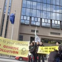Újabb halasztás az génpiszkált kukorica engedélyezése ügyében