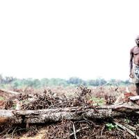 """""""Földszerzés"""" a Világbank pénzén"""