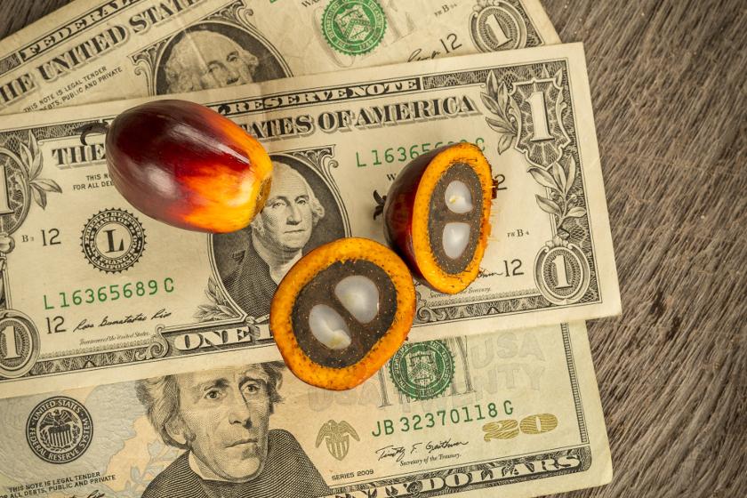 palm_oil_money_840px.jpeg