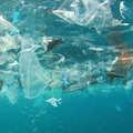 Műanyag mikroszemcsék az ivóvízben