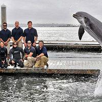 Őstorpedót talált a delfin
