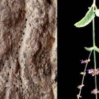 14 ezer éve is tettek virágokat a sírokba