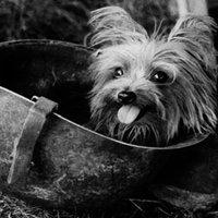 Híres kutyák a történelemben