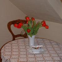 Egy csokor tulipán