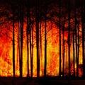 Ég a Föld - 2020 legnagyobb erdőtüzei öt percben