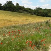 El Camino 2016., 5. nap - Puente la Reina - Estella - 23 km