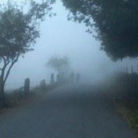 El Camino 28. nap: Sarria - Hospital da Cruz (35 km)