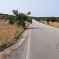 Portugál Camino 2018. 1. nap - Tomar - Cortica (25,7 km)