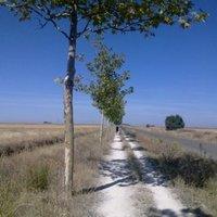 El Camino 18. nap: Sahagún - El Burgo Ranero (18,5 km)
