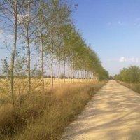 El Camino 16. nap: Carrión de los Condes - Moratinos (30 km)
