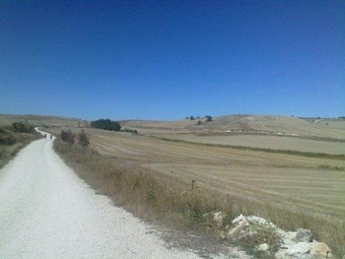 El Camino 406_1.jpg