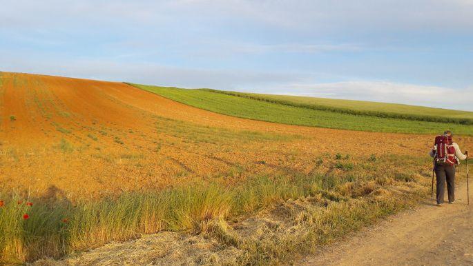 El camino, színpompás domboldal