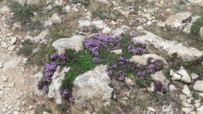 El camino, virágok a kövek között