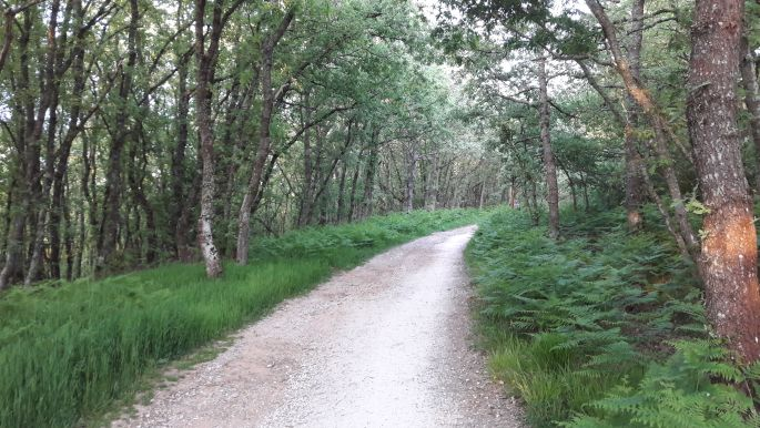 El camino, páfrányos erdő.