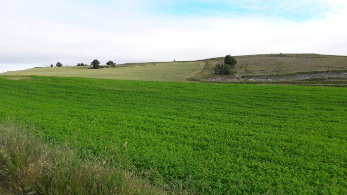 El camino mező