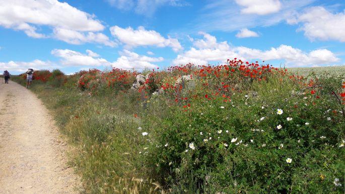 El camino virágok