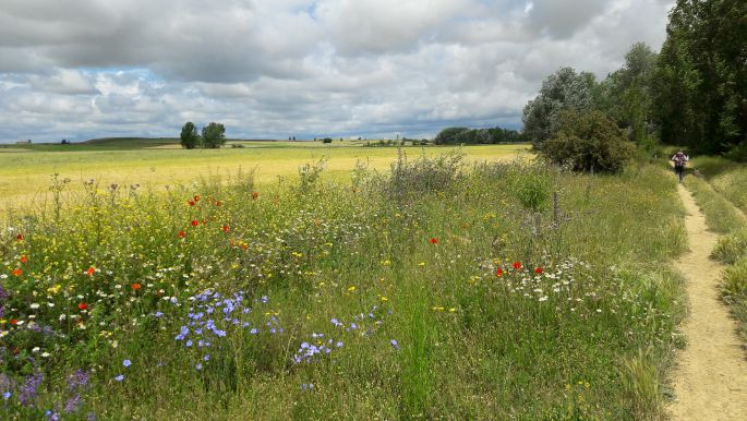 El camino, sűrű, sötét felhők és szép virágok