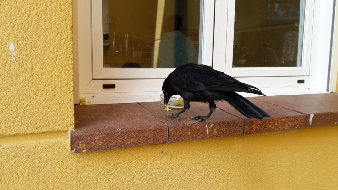 El camino, az a bizonyos fekete madár