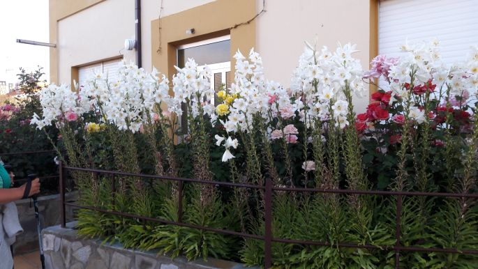 El camino, virágok