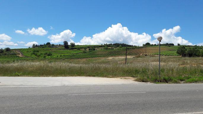 El camino, Cacabelos utáni szőlőhegy, azzal a bizonyos paddal szemközt