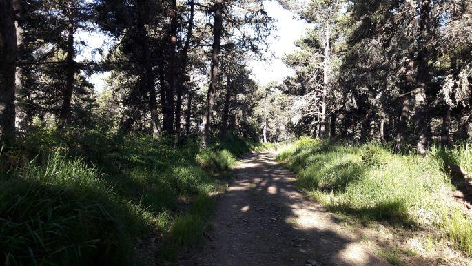 El camino, út