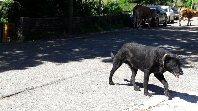 El camino, kutya