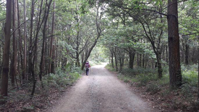 El camino, a csodaszép galiciai erdők egyike