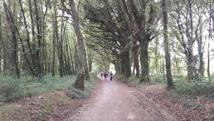 4_el_camino_galicia_erdo.jpg