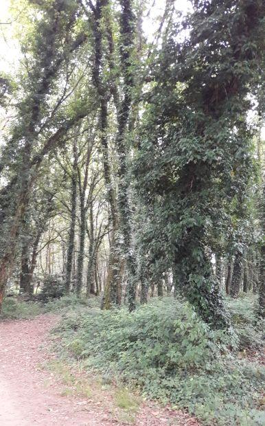 El camino, erdei út Galiciában