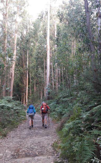 El camino, eukaliptusz erdő zarándokokkal
