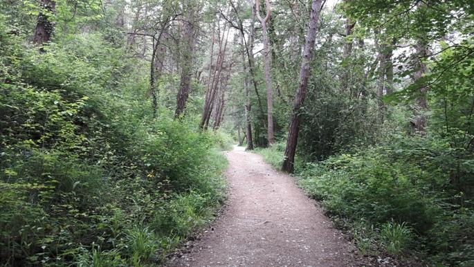 Széles erdei gyalogút.