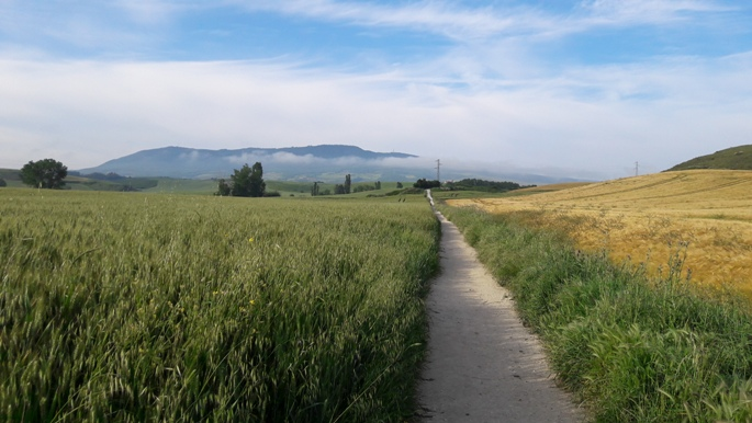 El camino, búzamező