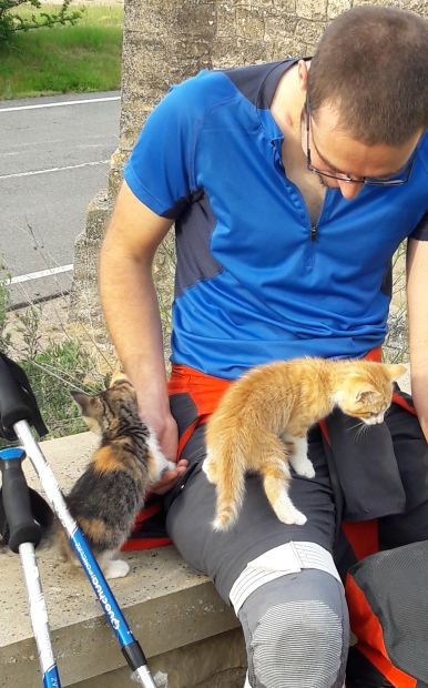 El camino zarándok cicákkal