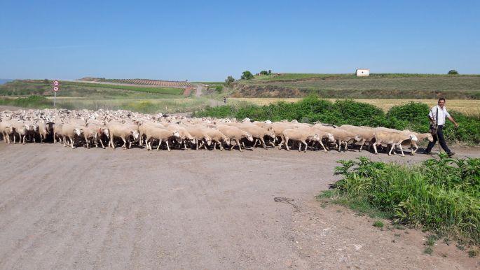 El camino, birkák