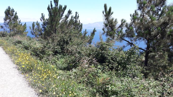 El camino, Finisterre, útmenti növényzet