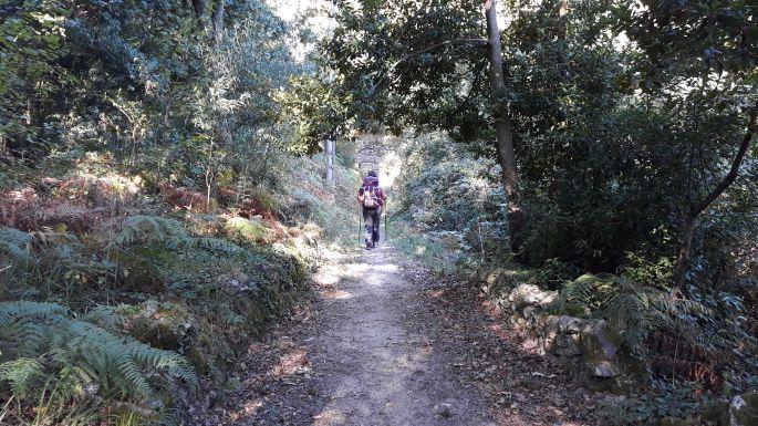 Portugál Camino Costa, szép erdei út vezet A Guarda városába