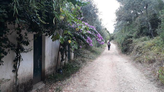 Portugál camino, gyalogút