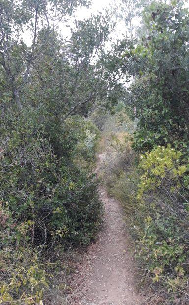 Portugál camino, gyalogösvény