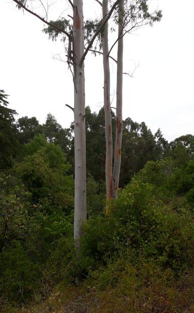 Portugál camino, fű, fa, bokor