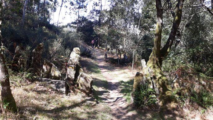 Variante Espiritual, erdei ösvény