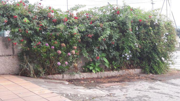 Variante Espiritual, virágos fal egy bár előtt, szemben a focipálya