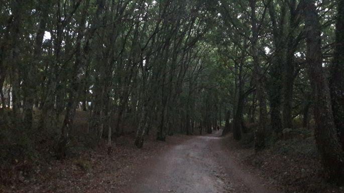 Portugál Camino, erdei út