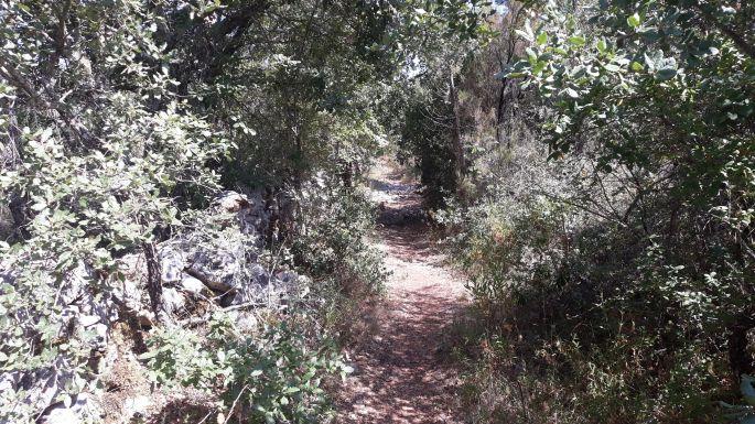 Portugál Camino, gyalogú