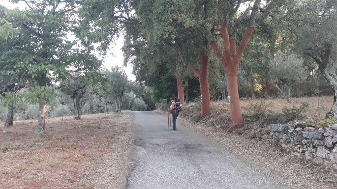 2_portugal_el_camino_ut.jpg