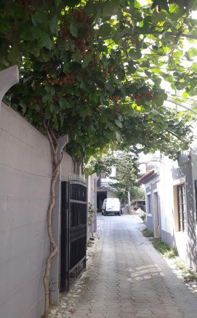 Portugál Camino, Ansiao, kiwi lugas a szállás bejáratánál