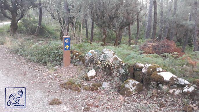 2_portugal_el_camino_jel.jpg