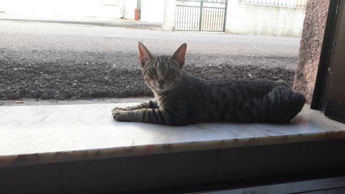 Portugál camino, cica