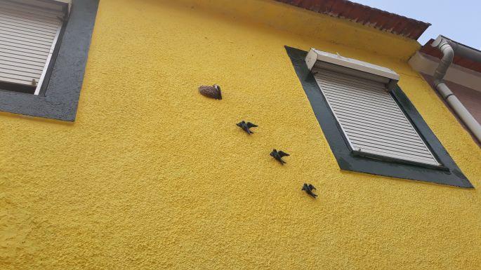 Portugál camino, fecskék a házfalon