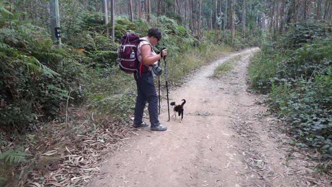 Portugál Camino, cica, eukaliptuszerdő és páfrány Erikával